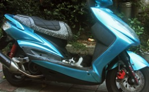 Blue scooter1